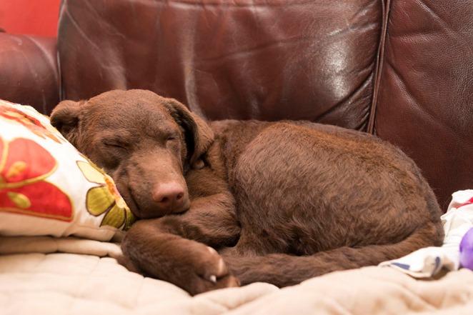 Puppy, Salem